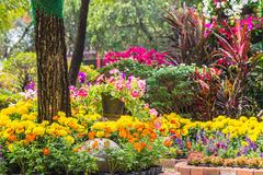Fiori nel giardino Fotografie Stock