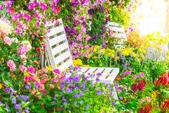 Fiori nel giardino Fotografie Stock Libere da Diritti
