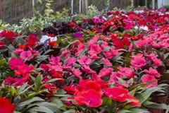 Fiori nel giardino Immagini Stock