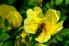 Fiori nel giardino botanico a Cluj Napoca, la Transilvania Fotografia Stock Libera da Diritti