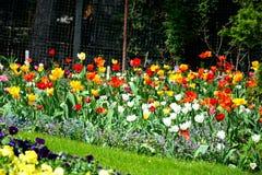 Fiori nel giardino botanico a Cluj Napoca, la Transilvania Immagine Stock Libera da Diritti