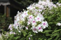 Fiori nel giardino, Canada Fotografia Stock