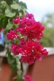 Fiori nel giardino, Canada Immagini Stock Libere da Diritti