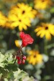 Fiori nel giardino, Canada Fotografia Stock Libera da Diritti