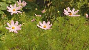 Fiori nel giardino di estate stock footage
