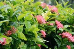Fiori nel giardino dopo la pioggia fotografia stock libera da diritti