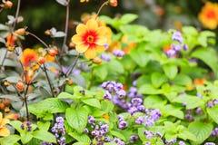 Fiori nel giardino Primavera o estate Fotografie Stock Libere da Diritti