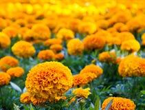 Fiori nel letto di fiore della città Fotografia Stock