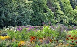 Fiori nel parc a Bruxelles fotografia stock libera da diritti