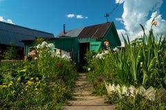Fiori nel villaggio Fotografia Stock