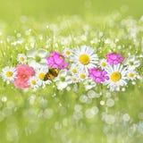 Fiori nell'erba rugiadosa fotografia stock