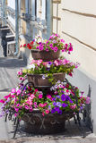 Fiori nella città Fotografie Stock