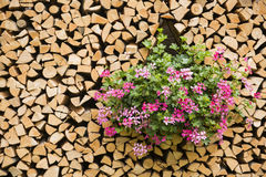 Fiori nella legnaia Fotografia Stock Libera da Diritti