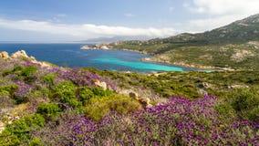 Fiori nella macchia a La Revellata vicino a Calvi in Corsica fotografia stock