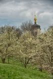 Fiori nella magnolia di Blelaya di tempo di primavera Immagine Stock