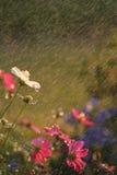 Fiori nella pioggia fotografia stock
