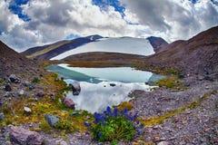 Fiori nella priorità alta del lago mountain Fotografie Stock