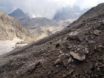 Fiori nelle alte montagne rocciose, le dolomia di Brenta Fotografia Stock Libera da Diritti