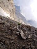 Fiori nelle alte montagne rocciose, le dolomia di Brenta Fotografie Stock