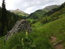 Fiori nelle montagne Fotografie Stock