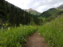 Fiori nelle montagne Immagini Stock