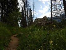 Fiori nelle montagne Fotografia Stock Libera da Diritti