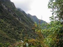Fiori nelle montagne con le nuvole Immagine Stock Libera da Diritti