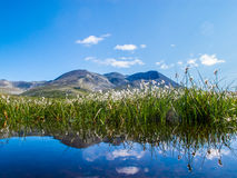 Fiori, Norvegia Fotografia Stock