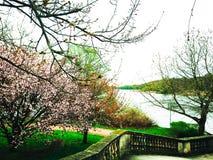 Fiori nuvolosi di rosa del fiore del fiume di giorno della primavera Fotografia Stock Libera da Diritti