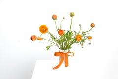Fiori olandesi arancio Fotografie Stock Libere da Diritti