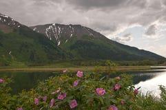 Fiori in palude con le montagne Snow-Capped Fotografia Stock