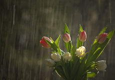 Fiori in pioggia Fotografia Stock