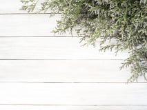 fiori porpora del limonium su fondo di legno bianco immagini stock