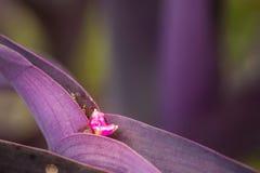 Fiori porpora, fiori porpora, fiori della pianta immagine stock libera da diritti
