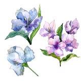 Fiori porpora e blu di alstroemeria Fiore botanico floreale Elemento isolato dell'illustrazione Immagine Stock Libera da Diritti