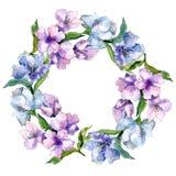 Fiori porpora e blu di alstroemeria Fiore botanico floreale Quadrato dell'ornamento del confine della pagina Fotografie Stock Libere da Diritti