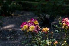 Fiori porpora e gialli nel parco di Madrid Fotografia Stock Libera da Diritti