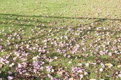 Fiori porpora su erba verde Fotografie Stock Libere da Diritti