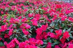Fiori in primavera Fotografie Stock