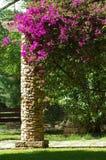 Fiori rampicanti del giardino Fotografie Stock Libere da Diritti