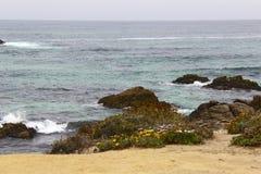Fiori rocciosi di giallo dell'oceano Pacifico Fotografie Stock