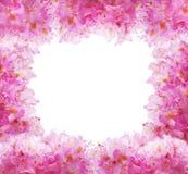 Fiori - rododendro Fotografia Stock Libera da Diritti