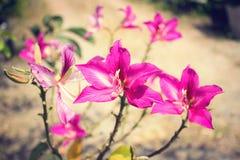 Fiori rosa Fotografie Stock Libere da Diritti