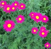 Fiori rosa Immagine Stock