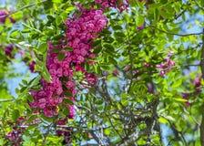 Fiori rosa allo zoo immagini stock