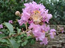 Fiori rosa carta da parati del fondo della natura, Fotografie Stock Libere da Diritti