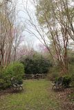 Fiori rosa che fioriscono sugli alberi verdi nel cortile del cortile della piantagione del sud fotografia stock libera da diritti