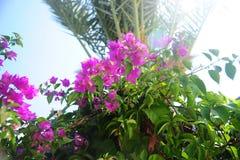 Fiori rosa con la palma immagine stock