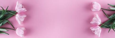 Fiori rosa dei tulipani su fondo rosa Carta per il giorno di madri, l'8 marzo, Pasqua felice Molla aspettante Cartolina d'auguri fotografie stock