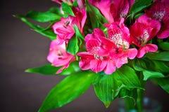 Fiori rosa del alstromeria Fotografie Stock Libere da Diritti